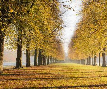 秋天赏叶的最佳去处非英伦莫属